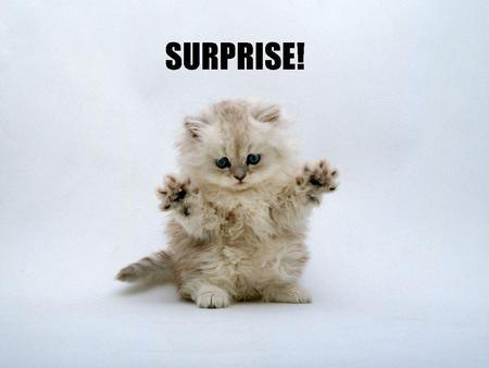 kitten-surprise-31
