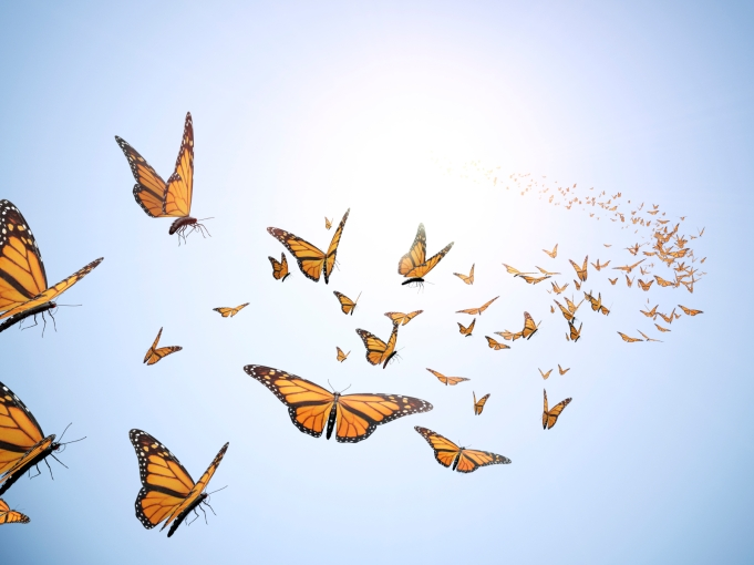 group-Flying-butterflies2