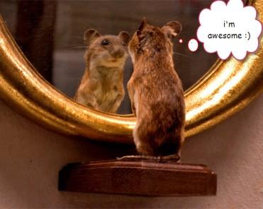 hamster-mirror