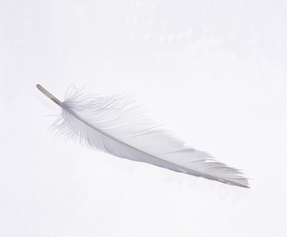 white_feather